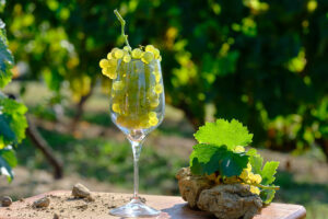 la vigne dans un verre à vin