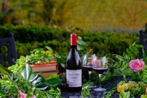 vigne et vinification du vin rouge