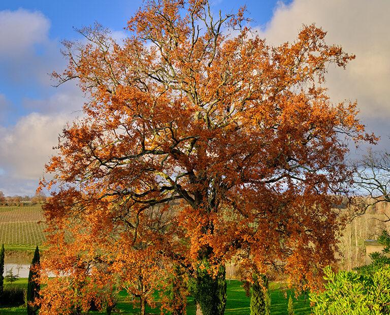 une année dans les vignes, l'automne